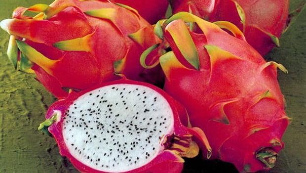 pitahajya_frukt